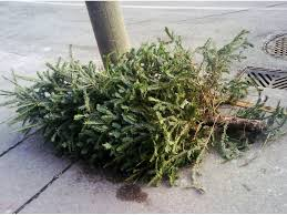 livingston holiday garbage recycling christmas tree pickup