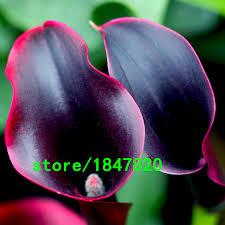 black calla online get cheap calla black aliexpress alibaba