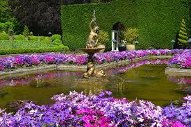 the butchart gardens italian garden purple