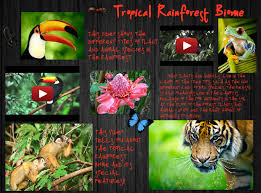 Plant Adaptation In Tropical Rainforest Tropical Rainforest Biome Biome Canopy Ecosystem En Forest