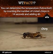 Crickets Chirping Meme - crickets gifs search find make share gfycat gifs