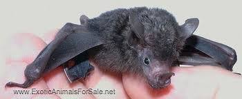 bats for sale