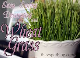 using wheat grass for spring decor for less than 2 the v spot