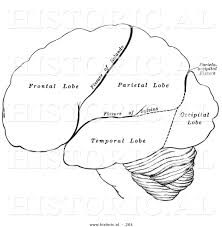 historical illustration of the hemispheres of the human brain