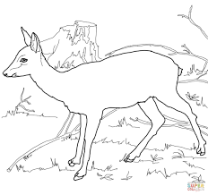 roe deer coloring page free printable coloring pages