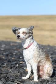 afghan hound collie mix 18 photos of dogs enjoying a windy day mnn mother nature network