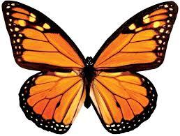 monarch butterfly in flight blank card paper house