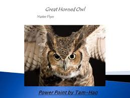 Scientific Name Of Barn Owl Life Cycle Of A Barn Owl By Emma Ppt Video Online Download