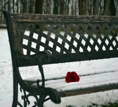 wait bench flower red bench snow rose cold wait flower soft hd mobile