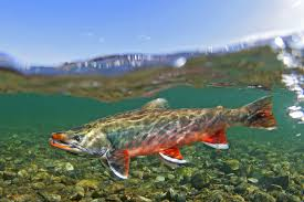 Alaska wild swimming images Wild salmon swimming google search fishing painting pinterest jpg