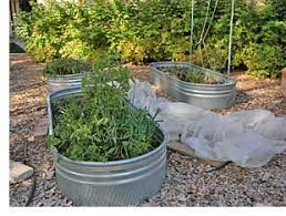Galvanized Trough Planter by Two Men And A Little Farm Galvanized Troughs As Raised Gardens