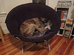Swivel Chair Cushion by Furniture Papasan Cushions With Papasan Rocking Chair