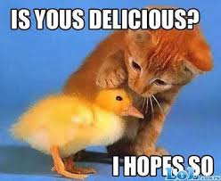Funny Duck Meme - funny animals funny duck
