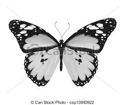 grey butterfly isolated on white background clip search