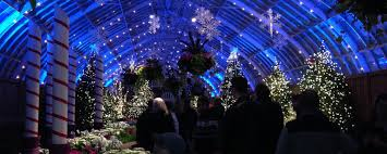 phipps conservatory christmas lights phipps conservatory winter flower show and lights hortshorts