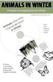 best 25 which animals hibernate ideas on pinterest animals that
