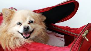 Wisconsin traveling with pets images Pet ownership jpg