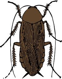 clipart cockroach clipart collection cockroach clipart 3