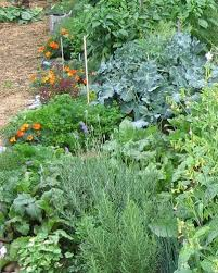fall vegetable garden houston gardening ideas