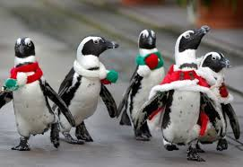 Cute Christmas Meme - christmas penguins in yokohama hakkeijima sea paradise christmas