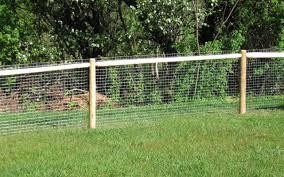 shocking image of cucumber fence trellis ideas lovely creative