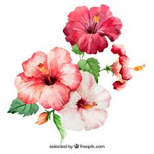 flower images watercolor hibiscus flowers vector free download