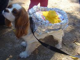 costume ideas for your fur pal