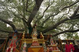 india bodhi tree which buddha attained enlightenment found