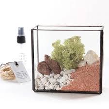 small glass brass box terrarium kit apollobox