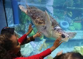 aquarium oklahoma aquarium unveils its highly anticipated sea turtle island