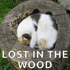 Getting Lost Meme - great cats be funny blog internet cat memes