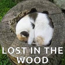 Sleeping Cat Meme - great cats be funny blog internet cat memes