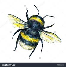 drawing of a bumble bee drawing art library