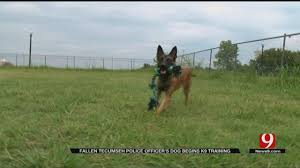 belgian shepherd louisiana police edmond woman kills dog says she did it a favor news9
