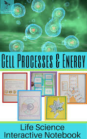 best 25 structure of a cell ideas on pinterest human cell