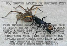 Afraid Of Spiders Meme - afraid of spiders meme 28 images funny quotes about killing