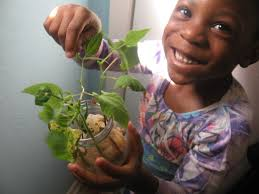 Plants Easy To Grow Indoors How To Grow Plants Indoors With Your Toddler Inhabitots