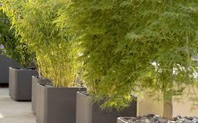 plant container garden design tips designing a container garden