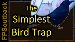 the simplest bird trap youtube