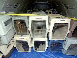 United Airlines Excess Baggage Animal Lovers Warn Against Shipping Pets As Cargo But There Are