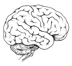 brain coloring page omeletta me
