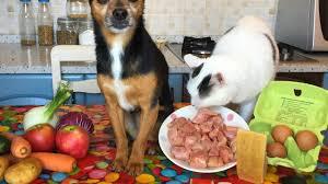 alimentazione casalinga gatto alimentazione casalinga e gatto 30 09 2017