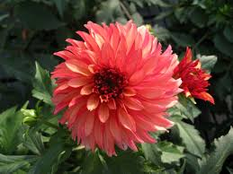 heat loving plants flower power 10 easy plants that can take the heat and bloom all