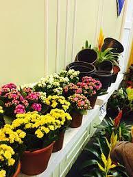flowers international goyang international flower festival