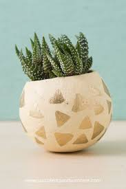 cute succulents diy painted planters with succulents succulents and sunshine