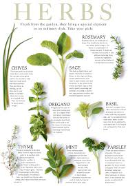 herb chart identification of herbs wildr