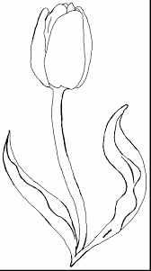 tulip coloring book pages to print poplar page outline beautiful