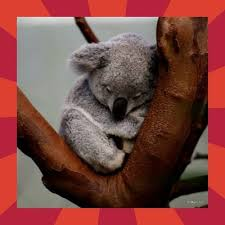 Meme Generator Koala - sad koala meme generator