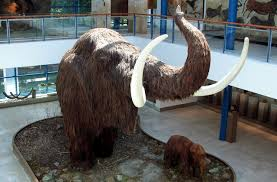 mission resurrect woolly mammoth