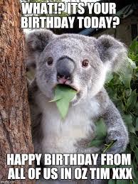 Australian Meme - australian koala surprise wtf latest memes imgflip